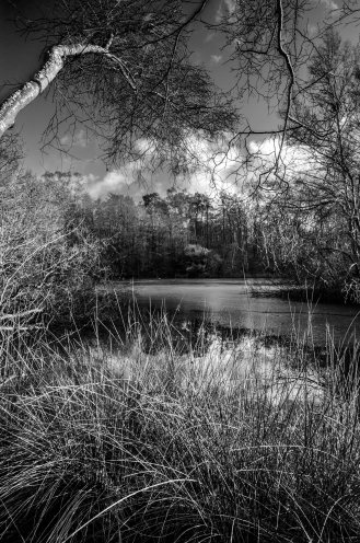 Buchan icy pond clouds B&W