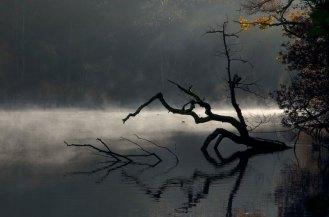 Buchan Park tree in water