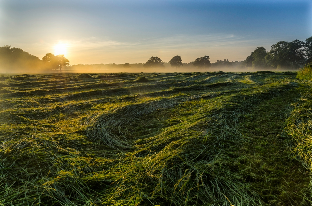Sunrise at Burstow