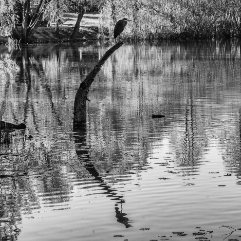 Heron reflection