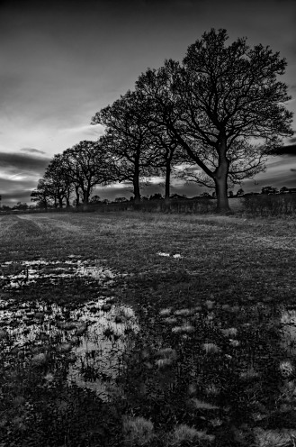 Nutfield line of trees B&W HR