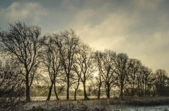 Sun & Trees 2