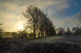 Sun & Trees 4