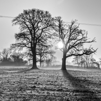 Two tree sunrise B&W