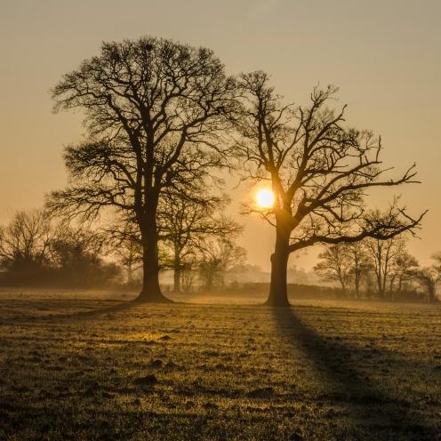 Two tree sunrise